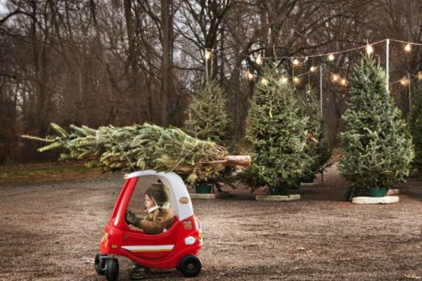 toy-car-and-tree