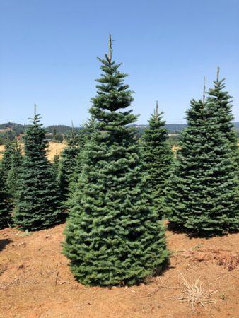 tree-care-1